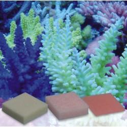 Korallen-Zucht Automatic Elements Eisen Konzentrat 5 Stück