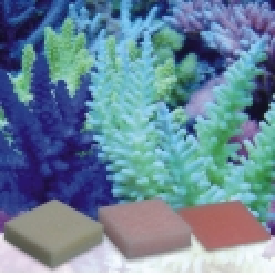 Korallen-Zucht Automatic Elements Kaliumjodid-Fluor Concentrate 5 Stück