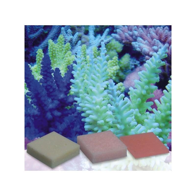 Korallen-Zucht Automatic Elements Eisen Konzentrat 20 Stück